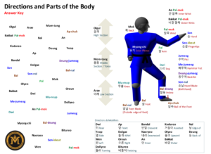 Body Parts Answers